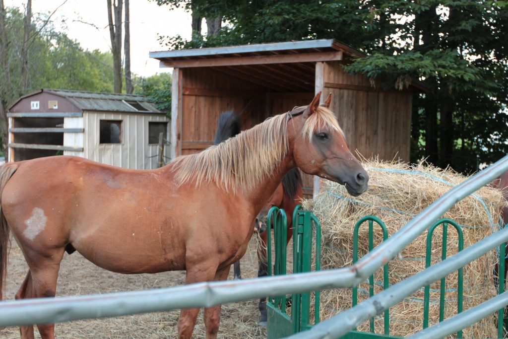 Picture of a Horse in a Barn